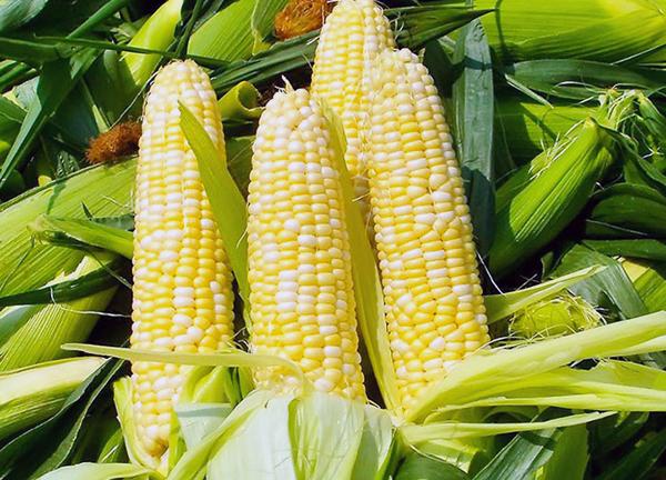 品世玉米浆4